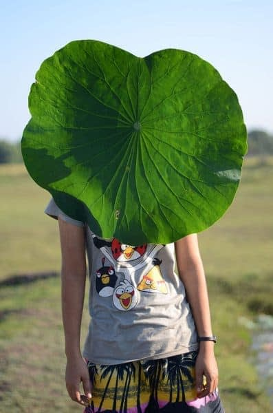 Neak Sophal art from her series Leaf
